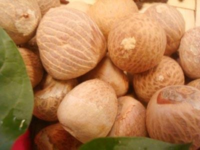 Areca catechu, Betel Nuts
