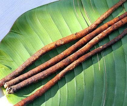 Arctium lappa, Burdock Root