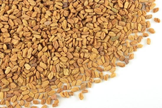 Trigonella foenum, Fenugreek Seed