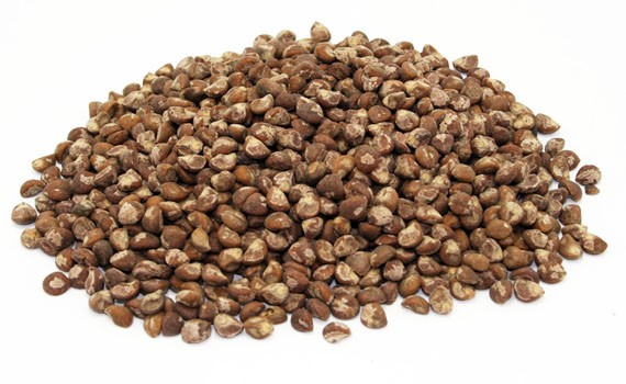 Argyreia Nervosa, Hawaiian Baby Woodrose Seeds, HBWS