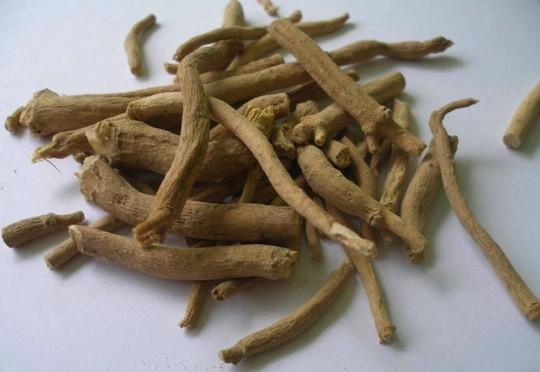 Silene Capensis, Xhosa Dream Herb