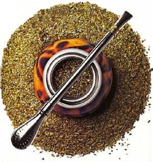 Ilex paraguariensis, Yerba Mate Tea