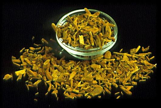 Corynanthe yohimbe, Yohimbe