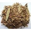 Tarchonanthus camphoratus, Bushman's Tobacco