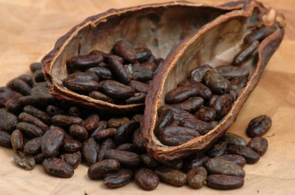 Theobroma cacao, Cacao Nibs